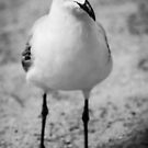 Seagull  by Charlotte  Pridding