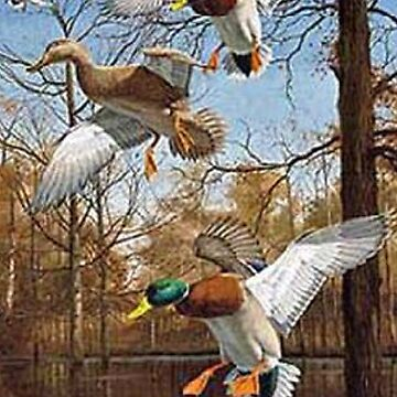 Mallards Cupped In The Swamp Phone Case by FunnyAsDuck