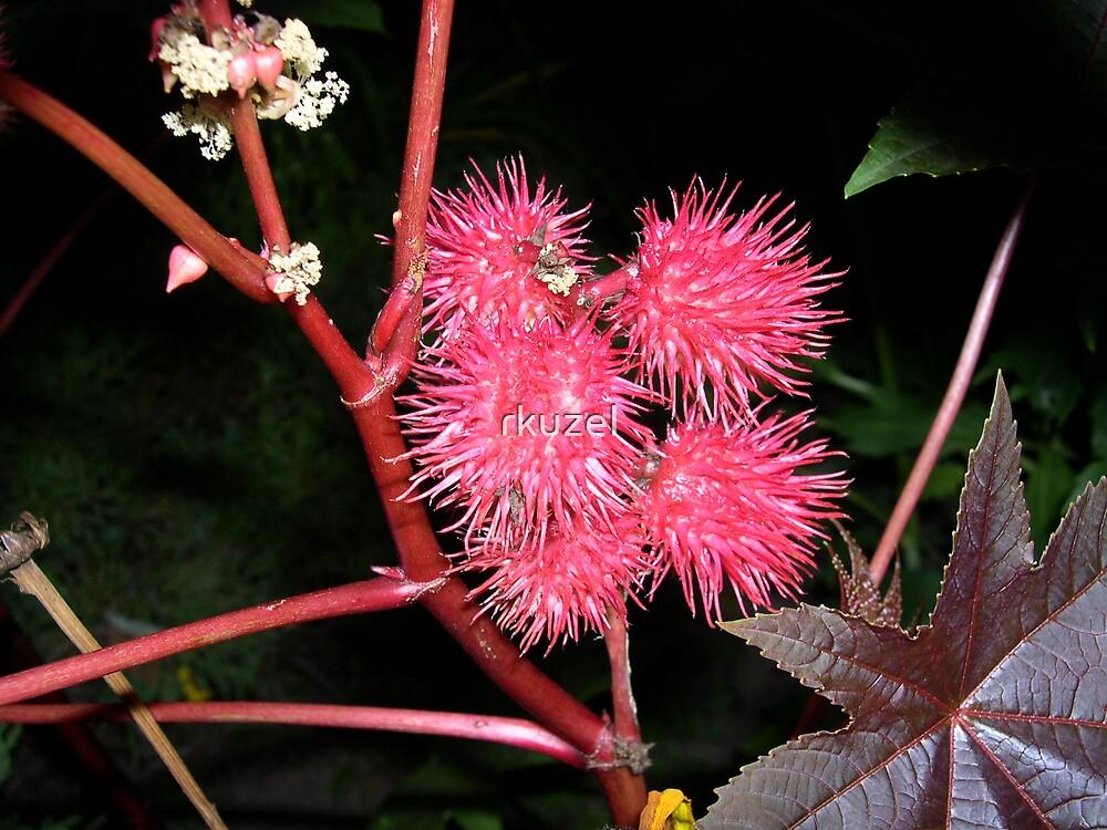 Red spine fruit by rkuzel