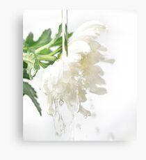 White water flower Canvas Print
