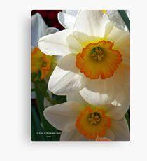 Shdowing Daffodils Canvas Print