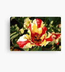 Cape Cod Tulip Canvas Print
