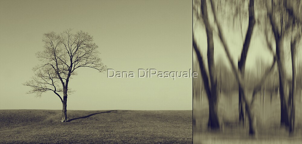 Can You Hear My Silent Words Whispering Along the Wind? by Dana DiPasquale