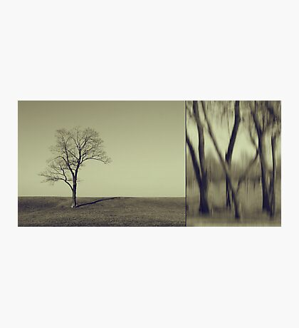 Can You Hear My Silent Words Whispering Along the Wind? Photographic Print
