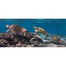 Turtle parade by Kara Murphy