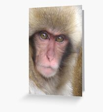 jigokudani snow monkey Greeting Card