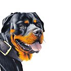 Rottweiler Cruza by Apatche Revealed