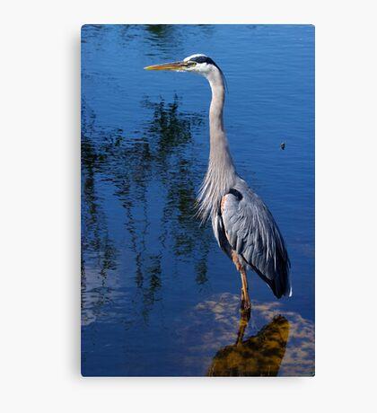 Great Blue Heron - The Whole Bird Canvas Print