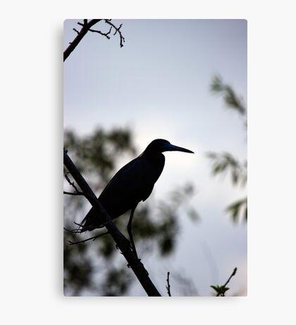 Little Blue Heron - Silhouette Canvas Print