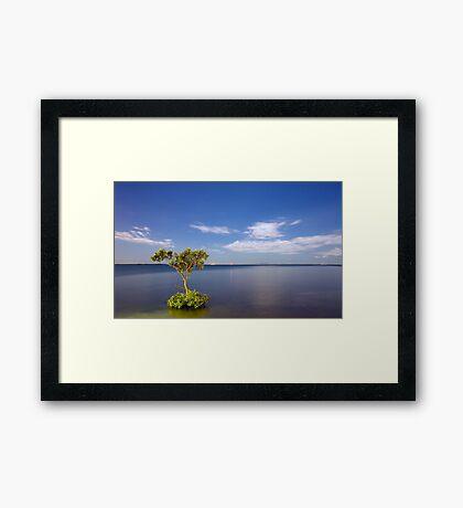Moonlit Mangrove Framed Print