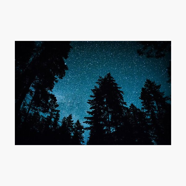 A Night in the Forest Photographic Print