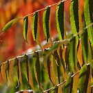 Back-lit Sumac Points the Way by Anna Lisa Yoder