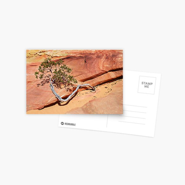 Manzanita  Postcard
