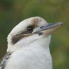Kookaburra by Andrew Trevor-Jones