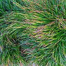 A Swirl of Grass by Mike Solomonson