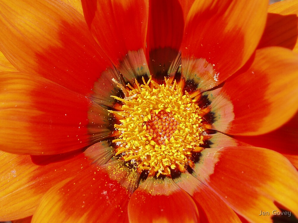Red Flower by Jen  Govey