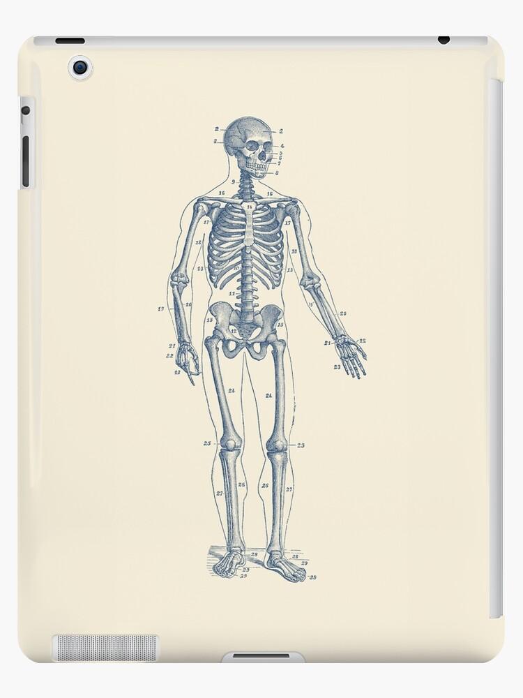 Perfecto Diagrama De Pie Esquelético Imágenes - Imágenes de Anatomía ...