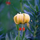 name  my  flower  please by Alexander Mcrobbie-Munro
