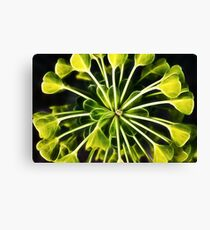 Euphorbia - fractal Leinwanddruck