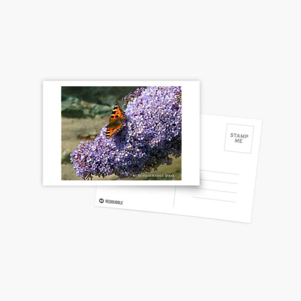 Butterfly 1# Postcard