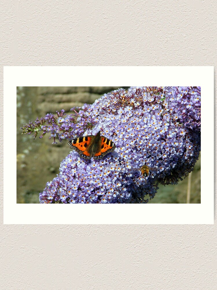 Alternate view of Butterfly2# Art Print
