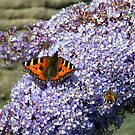 Butterfly2# by Alexander Mcrobbie-Munro