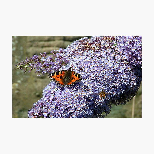 Butterfly2# Photographic Print