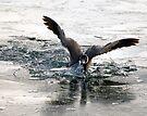 Ice Breaker by Nigel Bangert