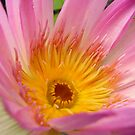 waterlily upclose and personal .. by nyxs