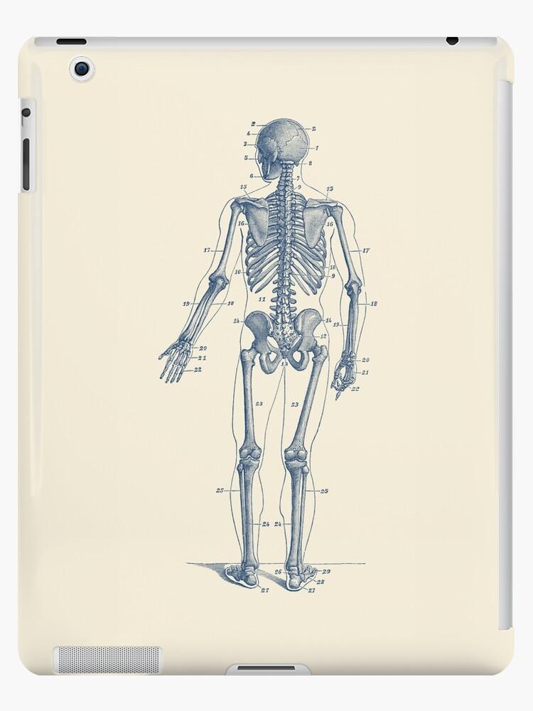 Vistoso Diagrama De Marcado Del Músculo Esquelético Friso - Imágenes ...