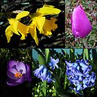 Spring Bulbs Collage by SunriseRose
