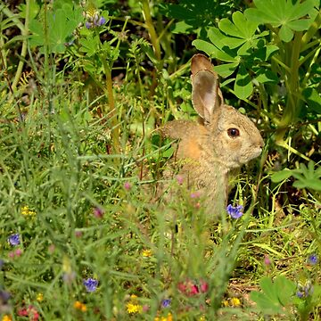 Spring Bunny Rabbit by DianaG