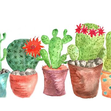 Five Cacti in pots in a row. by indicat