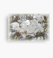 Star Magnolia Blossoms Canvas Print