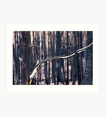Forest Destruction. Art Print