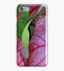Caladiums iPhone Case/Skin