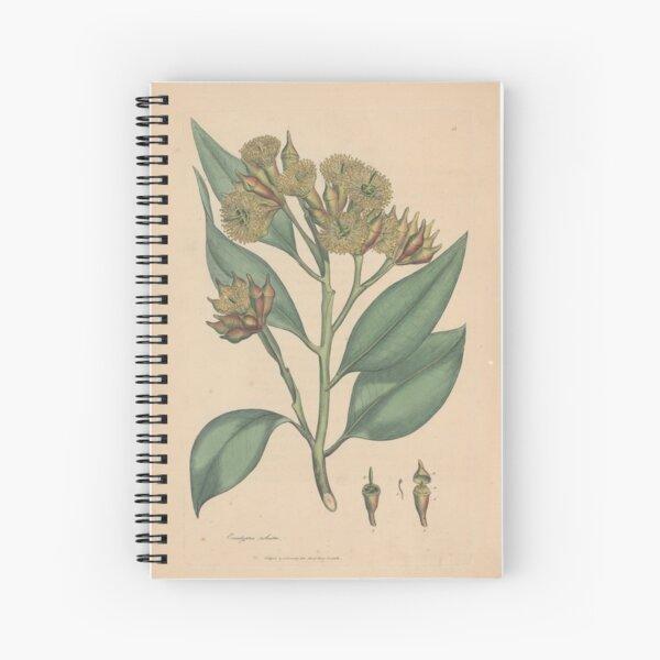 Botanical illustration: Eucalyptus robusta  – State Library Victoria Spiral Notebook