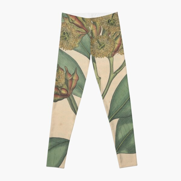 Botanical illustration: Eucalyptus robusta  – State Library Victoria Leggings