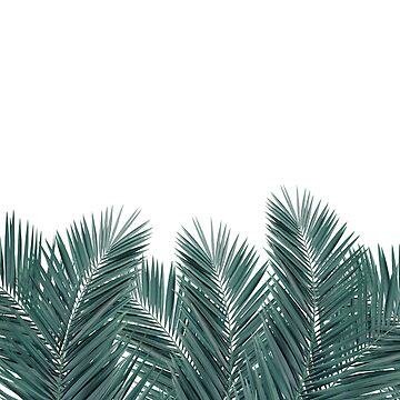 PALM LEAVES by urbanexclaim