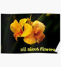 All about flowers Poster