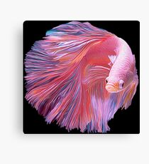 Pink Betta Fighting Fish Canvas Print