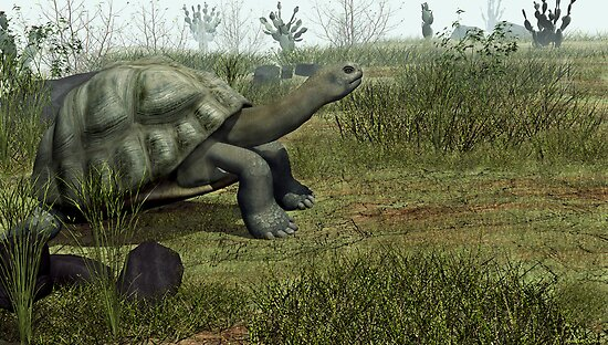 Galapagos Tortoise by Walter Colvin