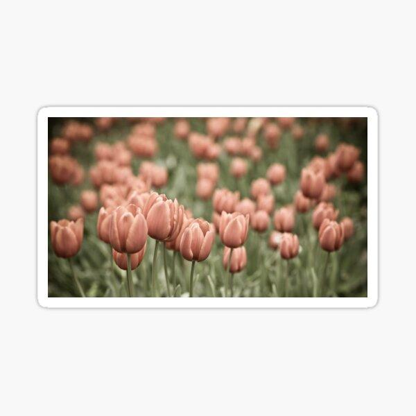 Tulip Field Sticker