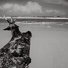 Pointing towards the sea by Chamika Amarasiri