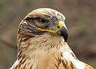 Ferruginous Hawk  by Kimberly Chadwick