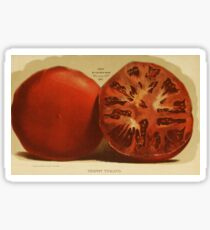 Vintage Illustration of a Sliced Tomato (1871) Sticker