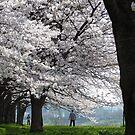 When Sakura Ruled the Earth by kibishipaul