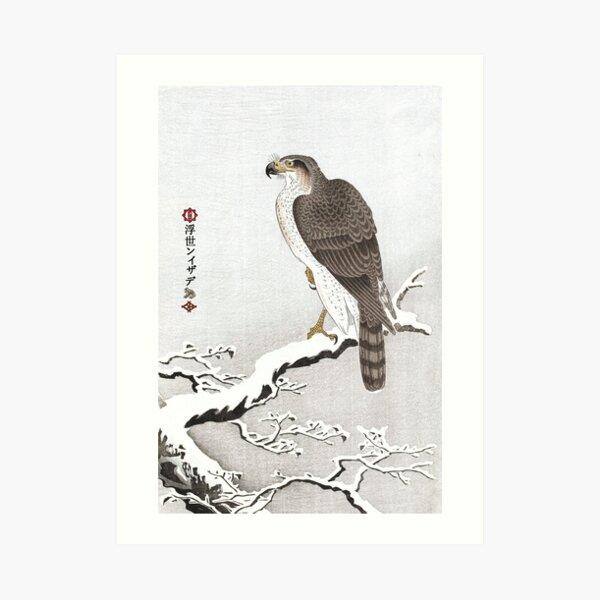 M-003 Goshawk on Snowy Branch Art Print