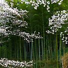 Haru no Sakura by kibishipaul