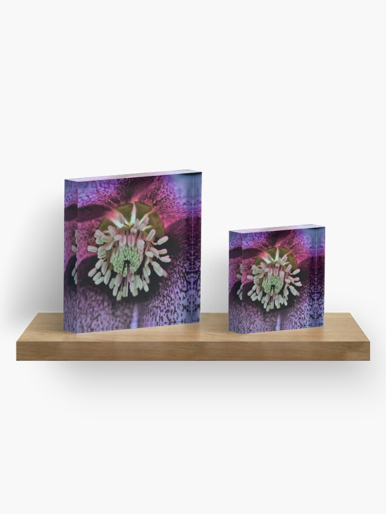 Alternate view of Purple Hellebore Acrylic Block